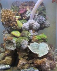 BB Reef Tank