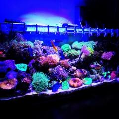 Slapper's Underwater World