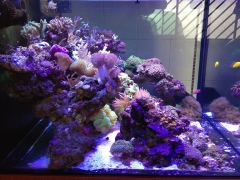 90G Reef Creations part 3