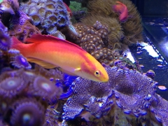90G reef Creations part 6