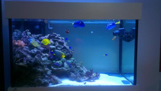 My 1st Marine Setup Fowlr Fish Only With Live Rock Singapore