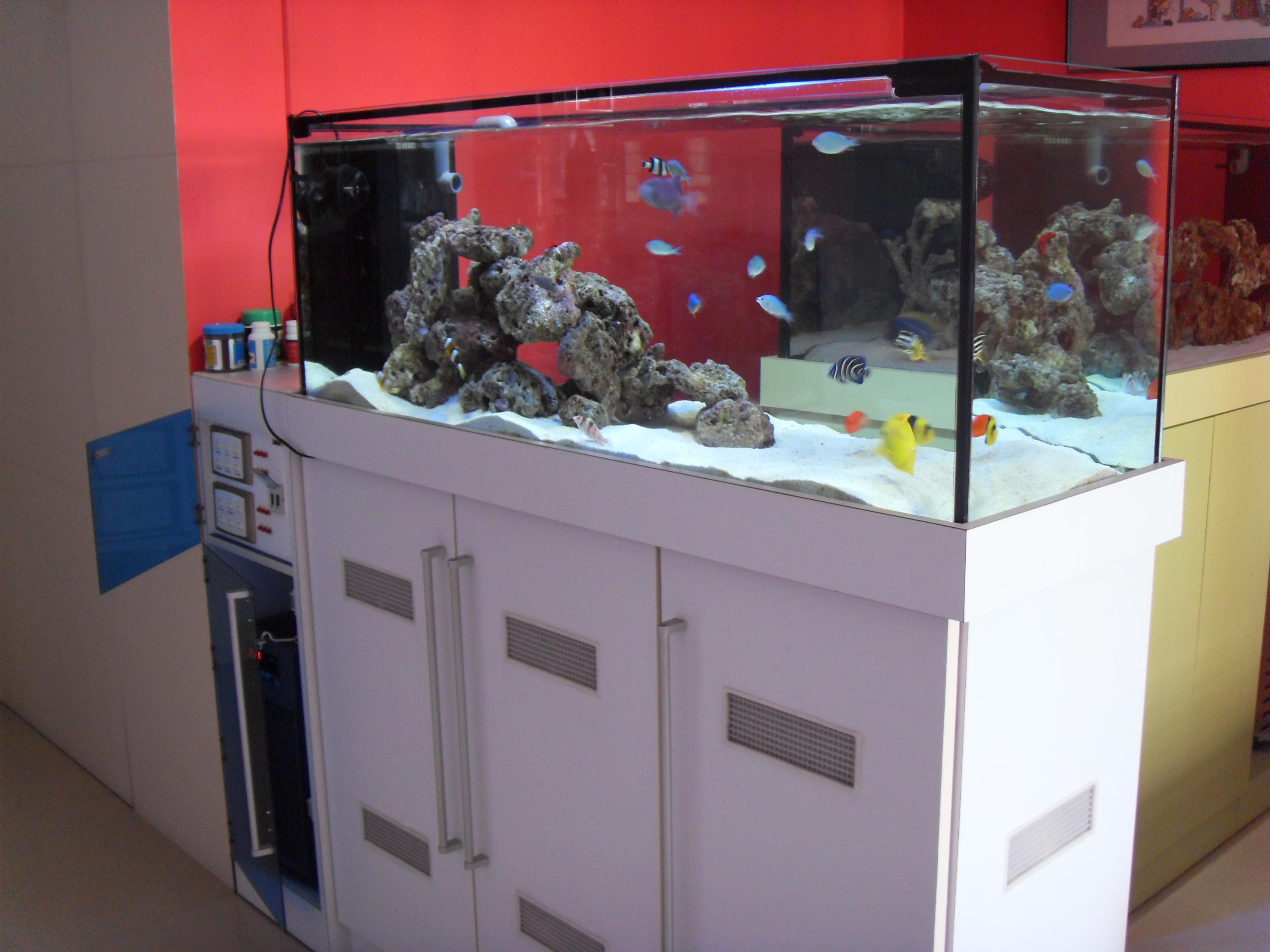 Aquarium fish tank singapore -