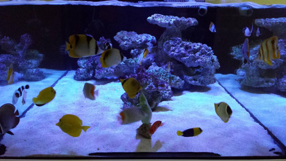 Convert to fowlr tank fowlr fish only with live rock for Fish only saltwater tank