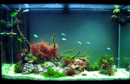 Marine planted tank - Page 2 - Marine Aquarium plants & Algae ...