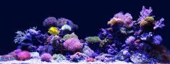 JWPS aquarium