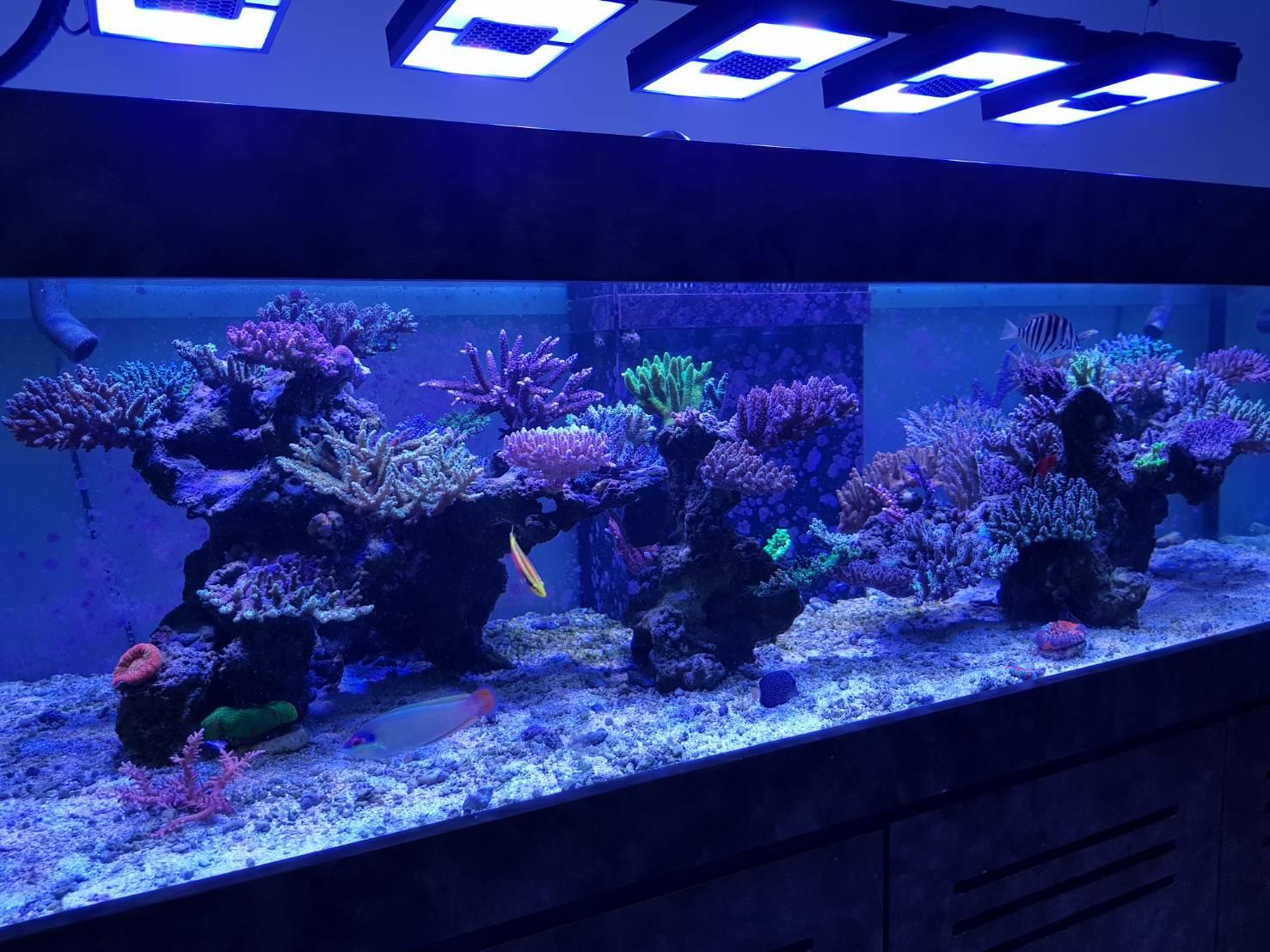 Ecotech Radion XR30 G4 Pro - Reef Market SG - Singapore Reef