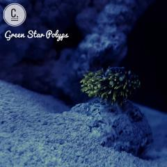 Green Star Polyps