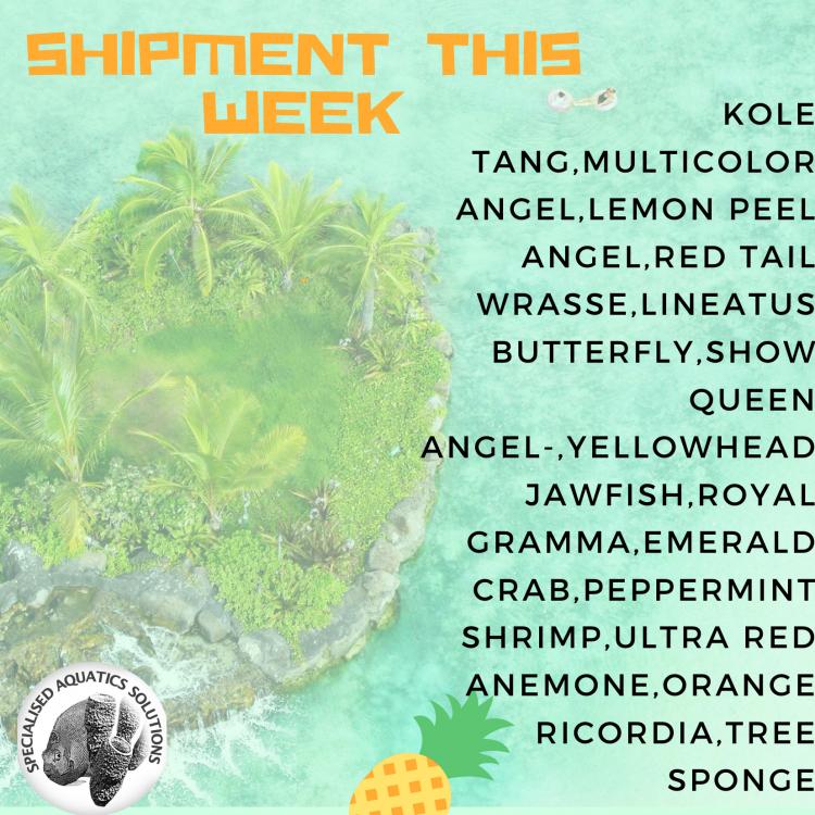 Hawaiian shipment this weekend (1).png