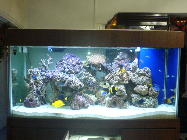 My 5ft fish only tank general reefkeeping singapore for Fish only saltwater tank