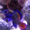 starfish123's Photo