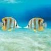 Tiny micro fish - last post by RayL