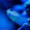 Nudibranch id please? - last post by jquek
