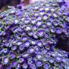 Id the thing at my zoas - last post by CKL