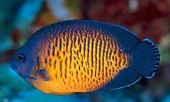 SRC Marine fish database