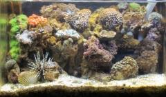 Rowa Reef