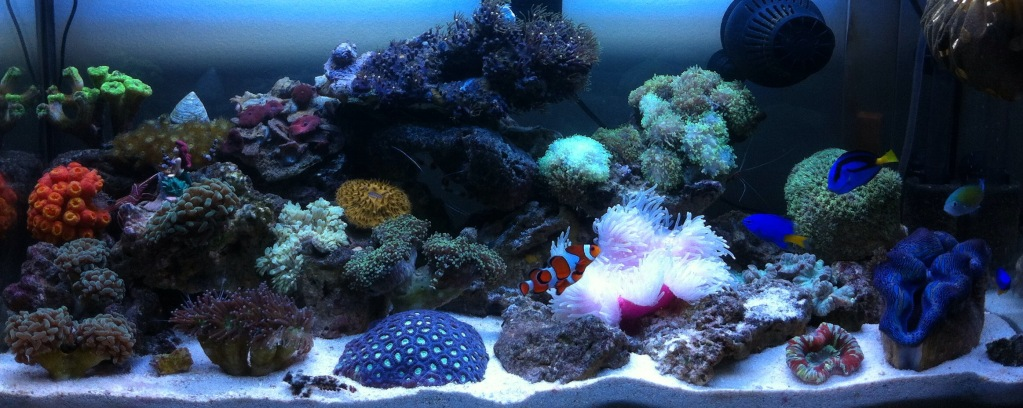 2ft Nano Reef Aquarium with T5 lightings
