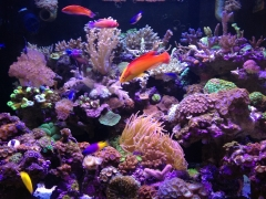 90G Reef Creations part 4