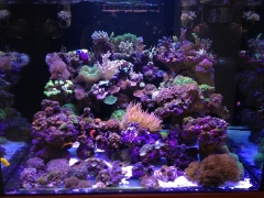 90G Reef Creations part 2