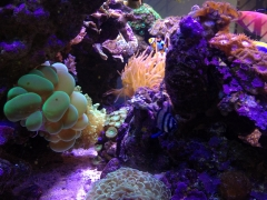 90G Reef Creations part 5