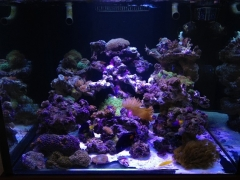 90G Reef Creations