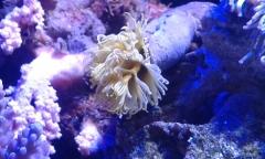 yellow tube worm