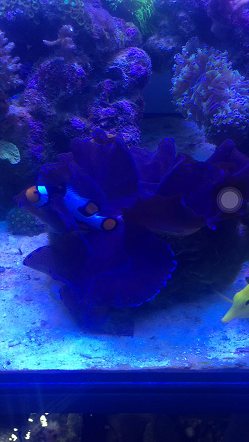 clown hosting clam.PNG