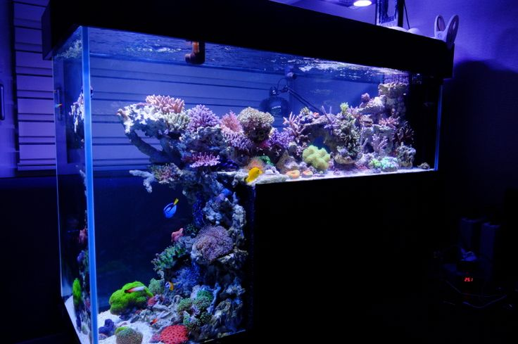 drop off reef tank.jpg