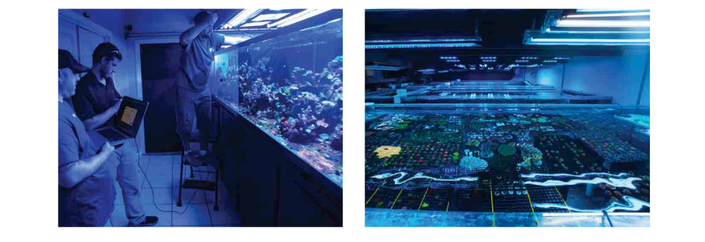 World_Wide_Corals_CoralLab.pdf34.png
