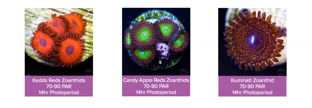 World_Wide_Corals_CoralLab.pdf38.png