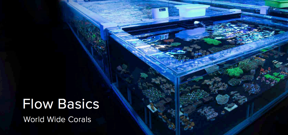 World_Wide_Corals_CoralLab.pdf1.png