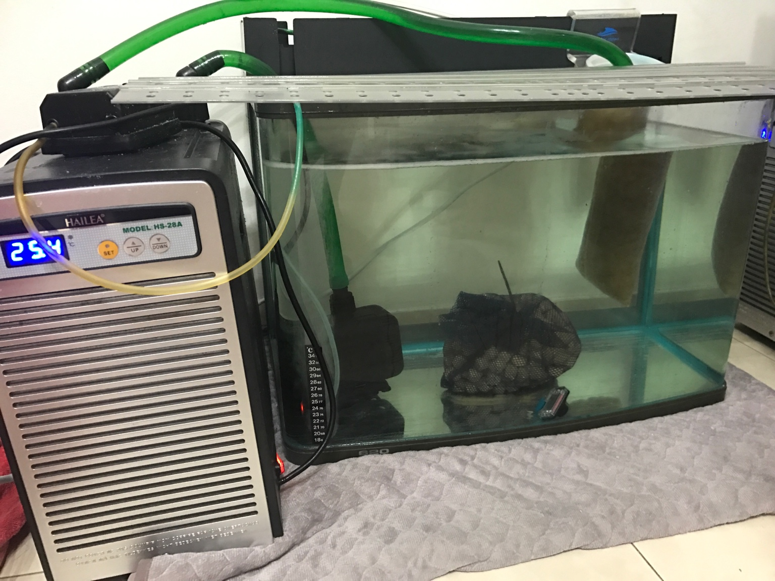 A simple quarantine tank with chiller