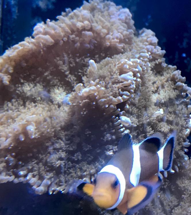Brown Shrooms w: Clownfish.jpg