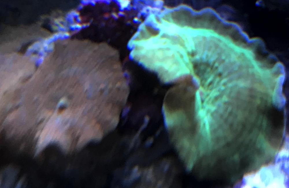 5bcd6f0744a7c_greenshroomwithred.thumb.jpg.5d370f1a1262b57eb905eeec9d343c2f.jpg