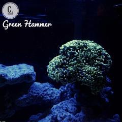 Neon Green Hammer