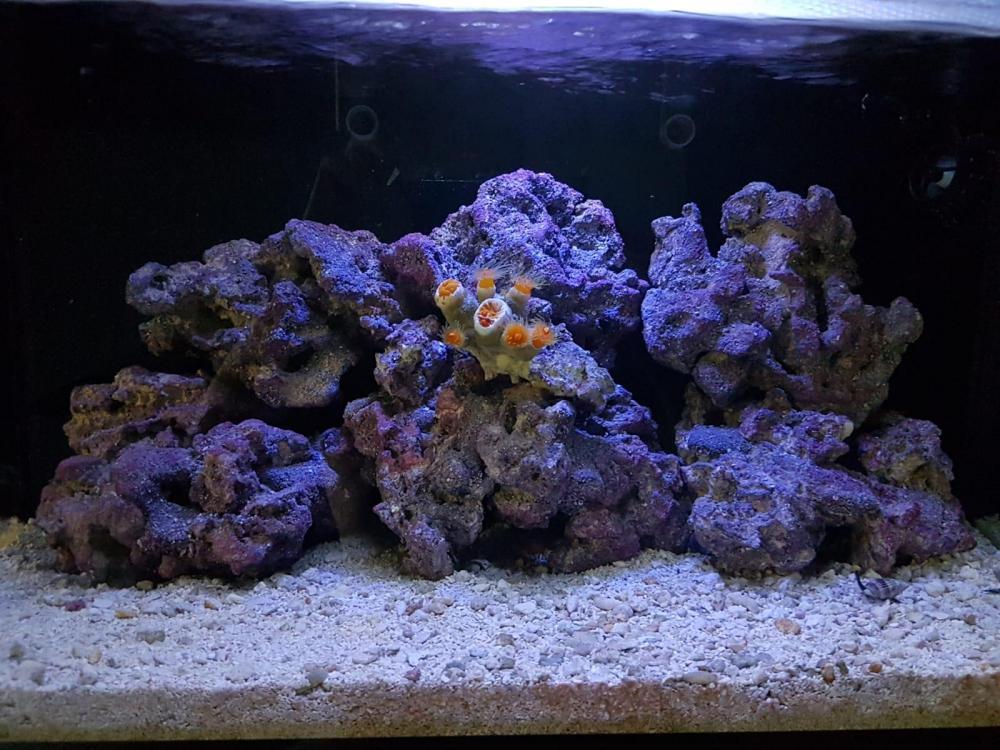 Caribsea liferocks.jpg