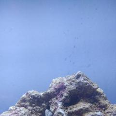 heycatfish