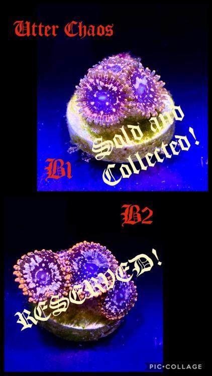 CA22731D-8E4B-4900-B17F-44A2E02A28C2.thumb.jpeg.f37a3ced7947804b0d0940b4c9e430b8.jpeg