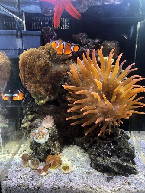 Day173 Corals WL.jpg