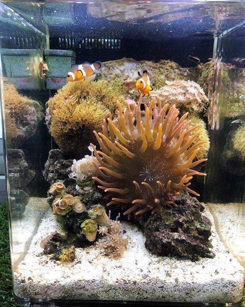 Day 187 Corals WL.jpg
