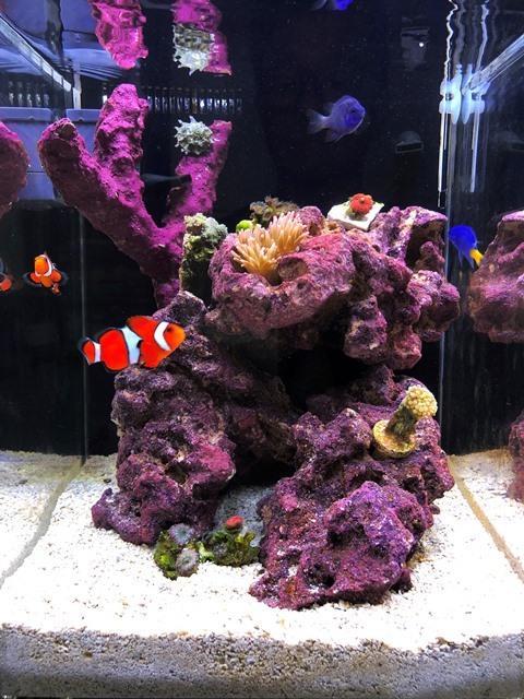 Day29 2nd Corals WL.jpg
