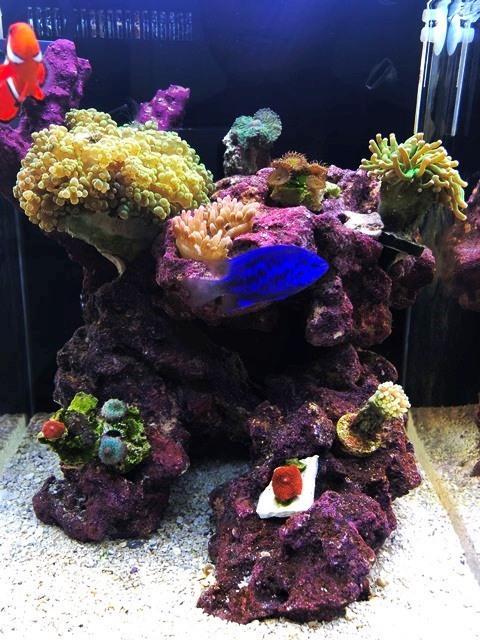 Day31 3rd Corals WL.jpg