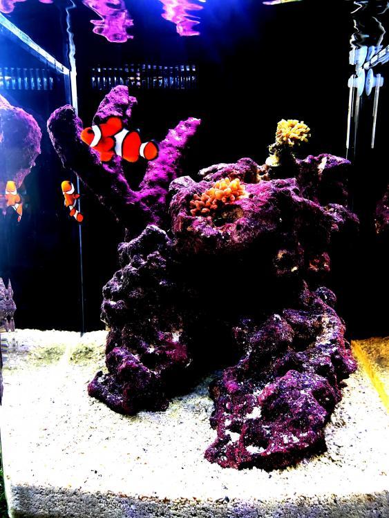 Day19 1st Corals WL.jpg