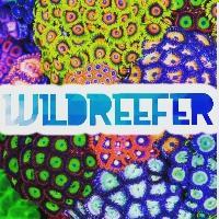 wildreef13