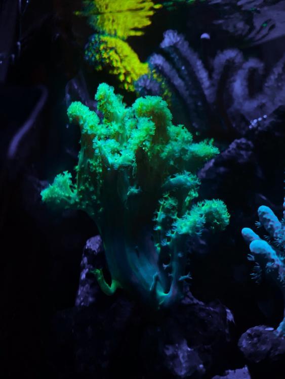 AfterlightImage.thumb.jpg.c576dc725b655409dd35481aab2d837f.jpg