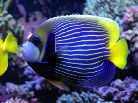 3 tips about Marine Fish Compatibility that you should know about