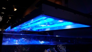 Revo Reef lighting