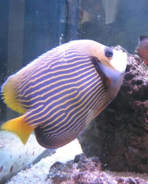 How to prevent disease outbreak in your marine fish tank