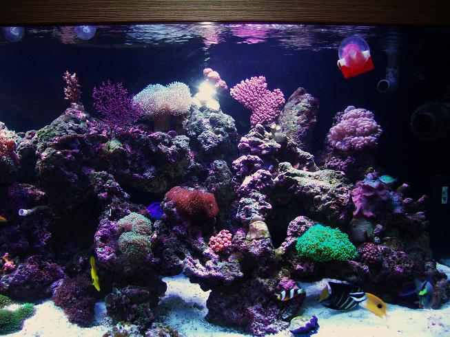 How to lower phosphate in your aquarium