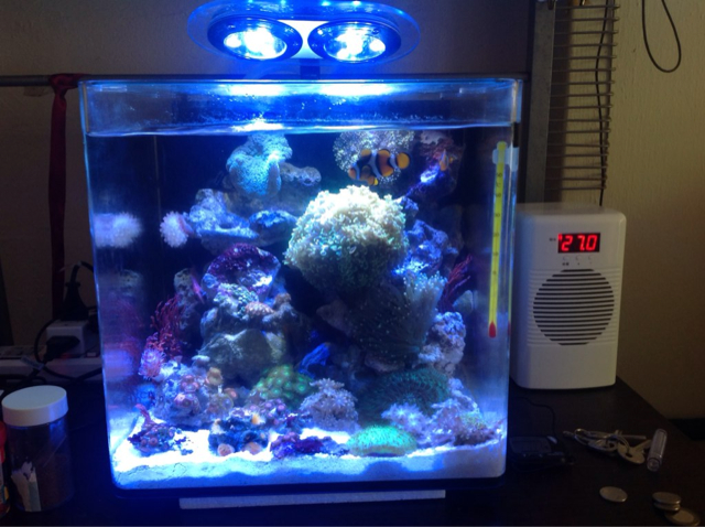 How to keep your aquarium cool during an Emergency ?