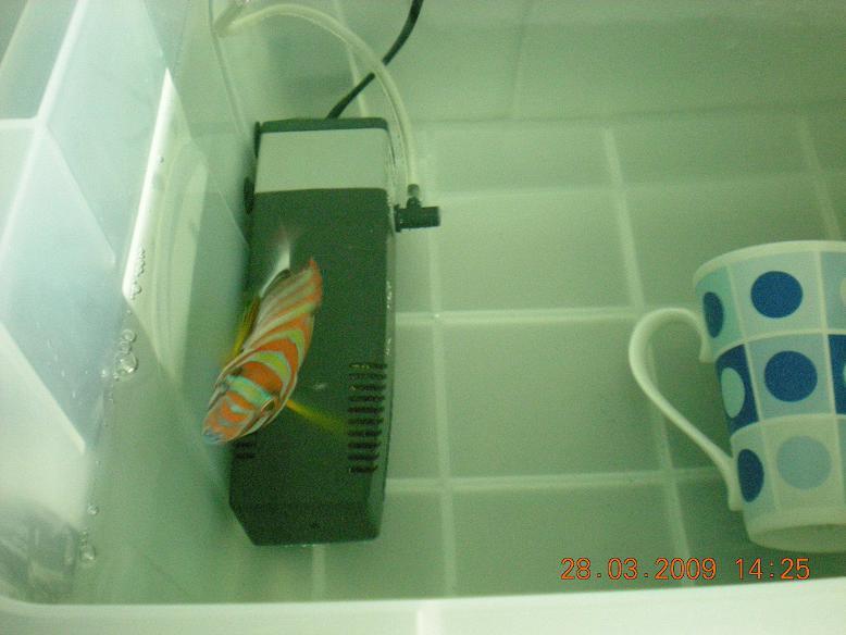 Setting Up a Quarantine Tank for a marine aquarium